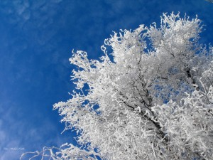 Kék - fehér tél