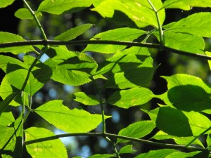 Nyári zöld