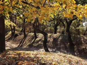 Őszi park I., Fonyód