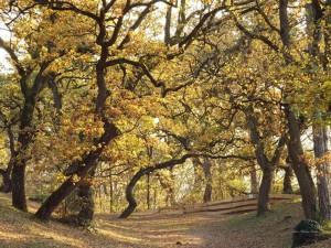 Őszi park II., Fonyód