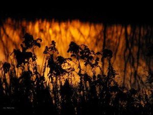 Alkonyati fények, árnyak
