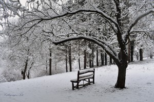 Arborétumban
