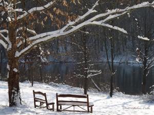 Téli napsütés a tóparton